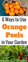 435 best gardening tips and projects images on pinterest