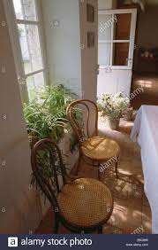 window table for plants bentwood thonet chairs in front of window with green plants on stock