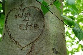 initials carved in tree memories of and of trees you can grow that