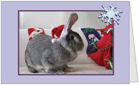 christmas cards small animal rescue society