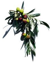 beauty flash balm brightening mask clarins olive tree