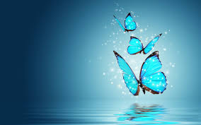 hd wallpapers photo collection wallpapers hd butterfly images