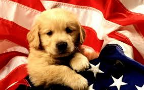 puppy thanksgiving cute hd national dog day wallpapers for celebration and concern