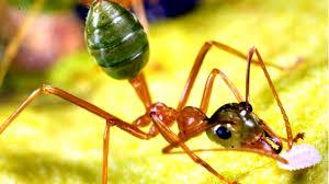incredible edible ants youtube