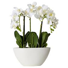 silk flowers willa arlo interiors phalaenopsis silk flowers in pot reviews