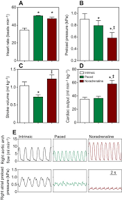 autoregulation of cardiac output is overcome by adrenergic