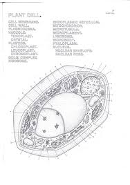 best 25 plant cell drawing ideas on pinterest plant cell