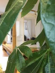 chambre d hote broceliande chambres d hôtes l hotié de brocéliande chambres d hôtes paimpont