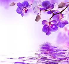 purple orchid flower purple orchid wallpaper