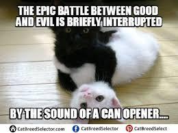 Cat Pic Meme - evil cat memes cat breed selector