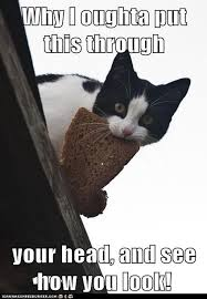 Cat In Bread Meme - lolcats bread lol at funny cat memes funny cat pictures with