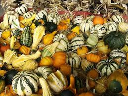 gourds how to plant grow and care for gourd vines garden
