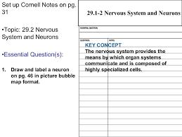Nervous System Concept Map 29 2 Neurons Cloudfront Net