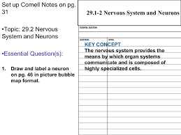 29 2 neurons cloudfront net