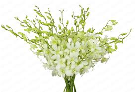 white dendrobium orchids orchid malaysia dendrobium l white 20 stalks orchid flowers