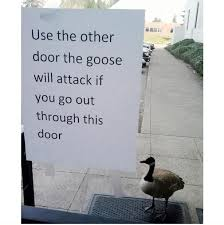 Goose Meme - attack goose animals being jerks know your meme