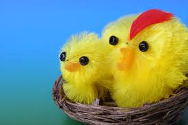 fuzzy easter fuzzy easter in nest stock photo image of ornamental