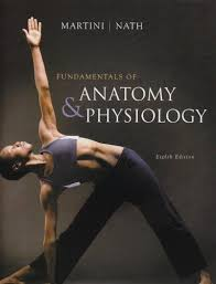 Human Anatomy And Physiology Marieb 5th Edition A U0026p Test Banks Downloads