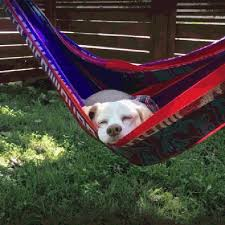 28 shameless dogs who are so lazy cuteness