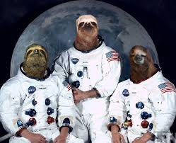 Astronaut Sloth Meme - list of synonyms and antonyms of the word nasa sloth