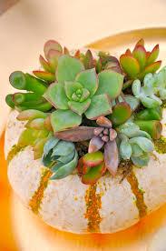 planter for succulents how to create a succulent pumpkin planter make flower cocktails