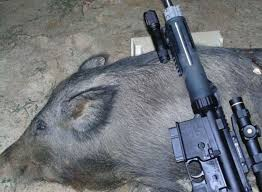 best green light for hog hunting field test nite hunter varmint for hunting hogs in the dark