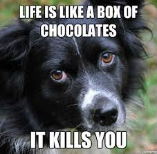 Sad Dog Meme - sad dogs report says 25 are unhappy breakingnews ie