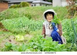 old woman vegetable garden stock photo 425628673 shutterstock