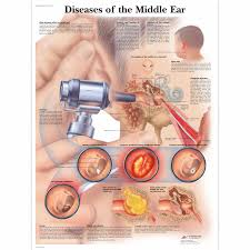 Inner Ear Anatomy And Physiology Kuvahaun Tulos Haulle Diseases Of The Middle Ear Anatomi