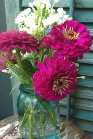 best 25 zinnia garden ideas on pinterest zinnias zinnia flower