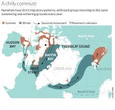 Baffin Bay On World Map by The World U0027s Weirdest Whale Hunt For The Sea Unicorn U2013 Life U2013 17