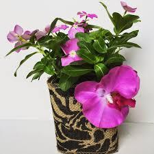 Challenge Flower Pot Diy Milk Flower Pot Sammy Makes Six