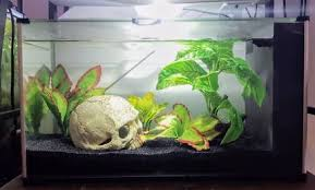 fish tank ornaments in gumtree australia free local
