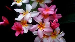 beautiful flowers wallpaper for desktop wallpapersafari