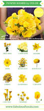 best 25 yellow flowers names ideas on pinterest yellow flowers