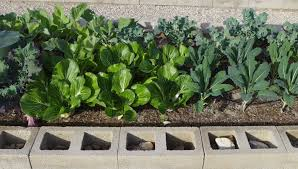 Vegetables Garden Ideas Desert Gardening Ideas For Your Veggie Garden