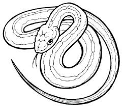 unsurpassed printable snake pictures snakes coloring pages of