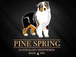 australian shepherd kc pine spring australian shepherds australian shepherd puppies for