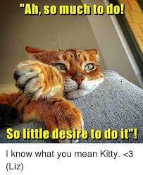 Mean Cat Memes - 25 best memes about mean kitty mean kitty memes