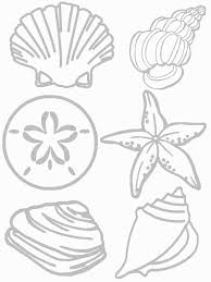 shells coloring page seashore collage craft preschool