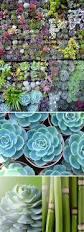 176 best succulent ideas images on pinterest flowers marriage