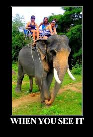 Elephant Meme - you see it elephant