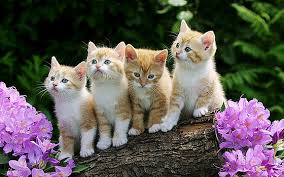 beautiful kittens kismet kittens artwork for sale florida california united