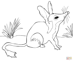 australian bilby coloring page free printable coloring pages