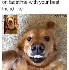 Meme Best Friend - best 25 funny best friend memes ideas on pinterest best friends