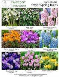 fall bulb planting westport art u0026 gardenwestport art u0026 garden