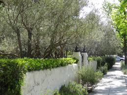 Sidewalk Garden Ideas Curb Appeal Ideas For Sidewalk Gardens Tended