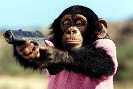 Chimp Meme - create meme bibizyana bibizyana monkey chimp pictures