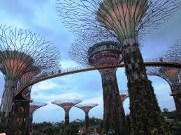 big tree picture of gardens by the bay singapore tripadvisor