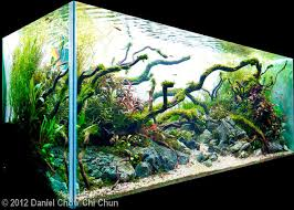 Most Beautiful Aquascapes Freshwater Stingrays European Aquascape Channel